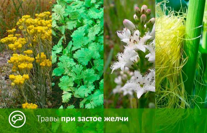 Травы при застое желчи