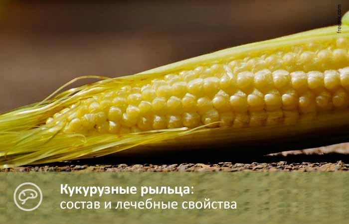 Кукурузные рыльца. Фото