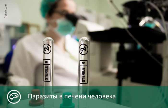 Паразиты в печени человека: симптомы заболеваний, какие черви живут в этом органе, как определить и проверить