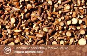 Полезные свойства и применение корня шиповника